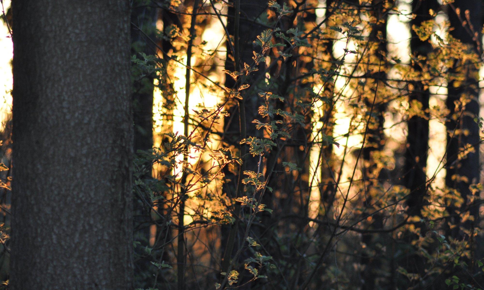Forstpflege Unger